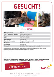 Kater Tiger aus Bad Vilbel